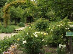 roses-jardin-mini
